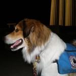 Service Dog Kain